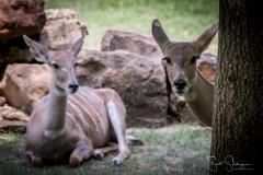 Fort Worth Zoo