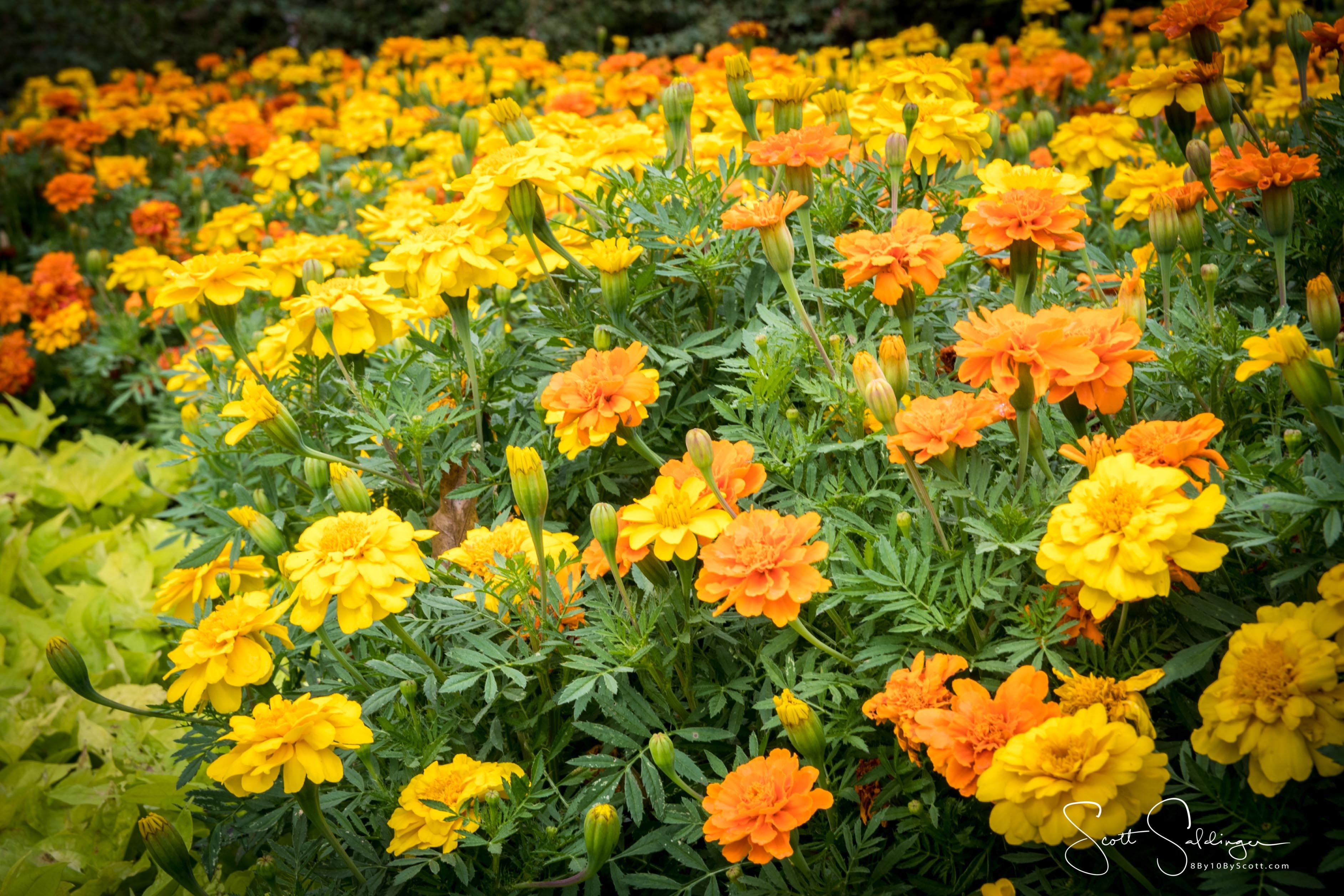 Arboretum102117-2292