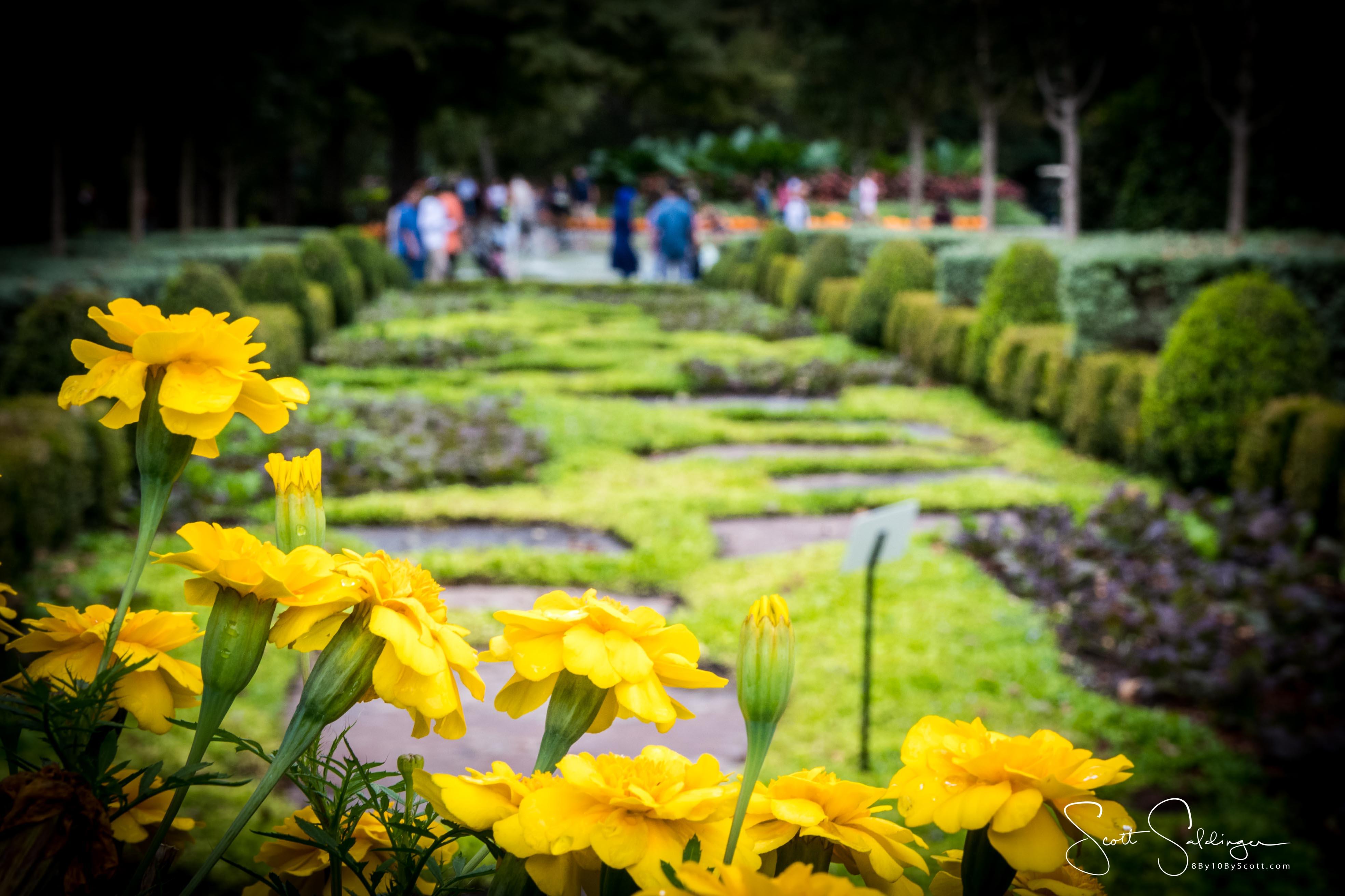 Arboretum102117-2342