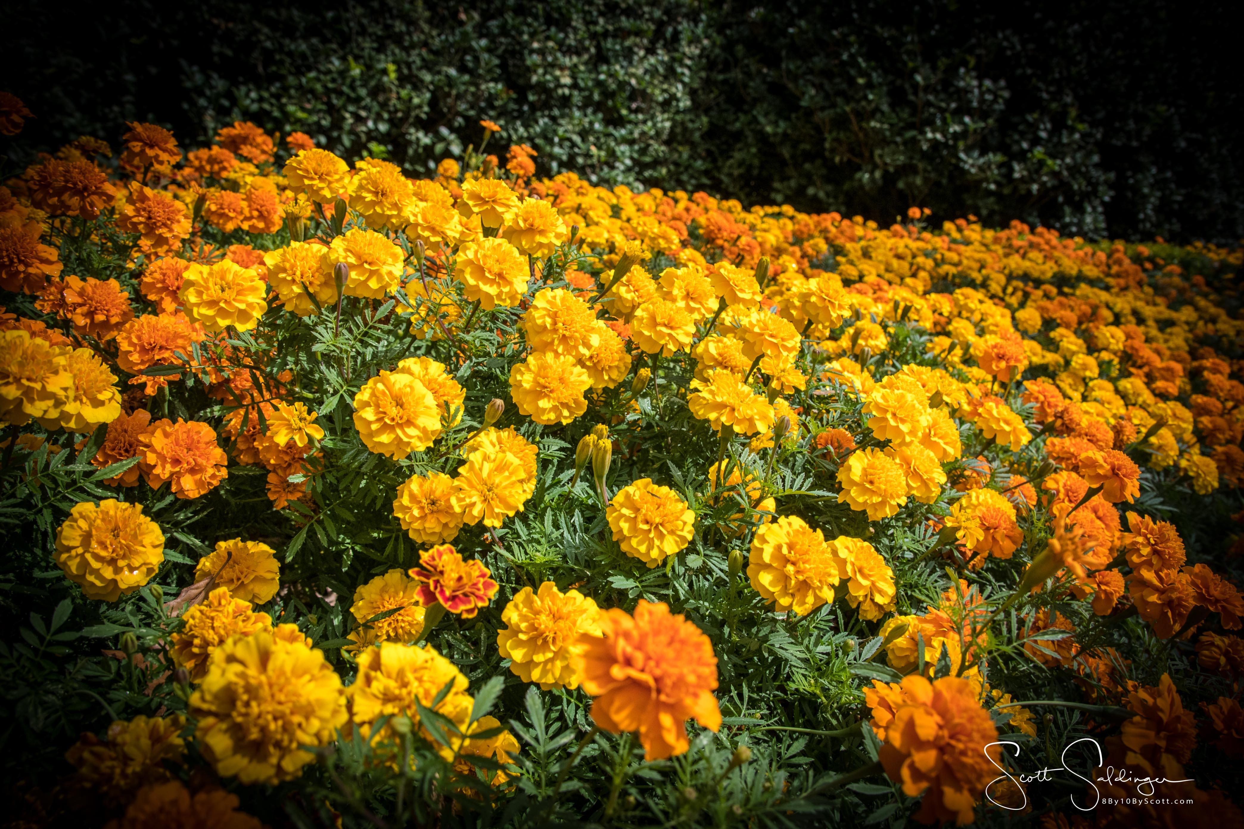 Arboretum102117-2380