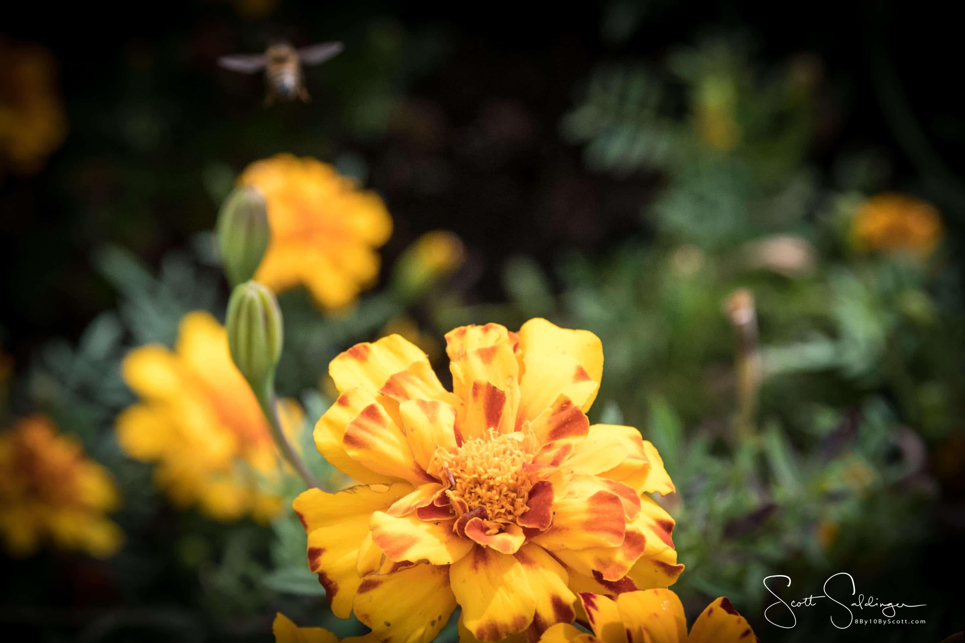Arboretum102117-2422