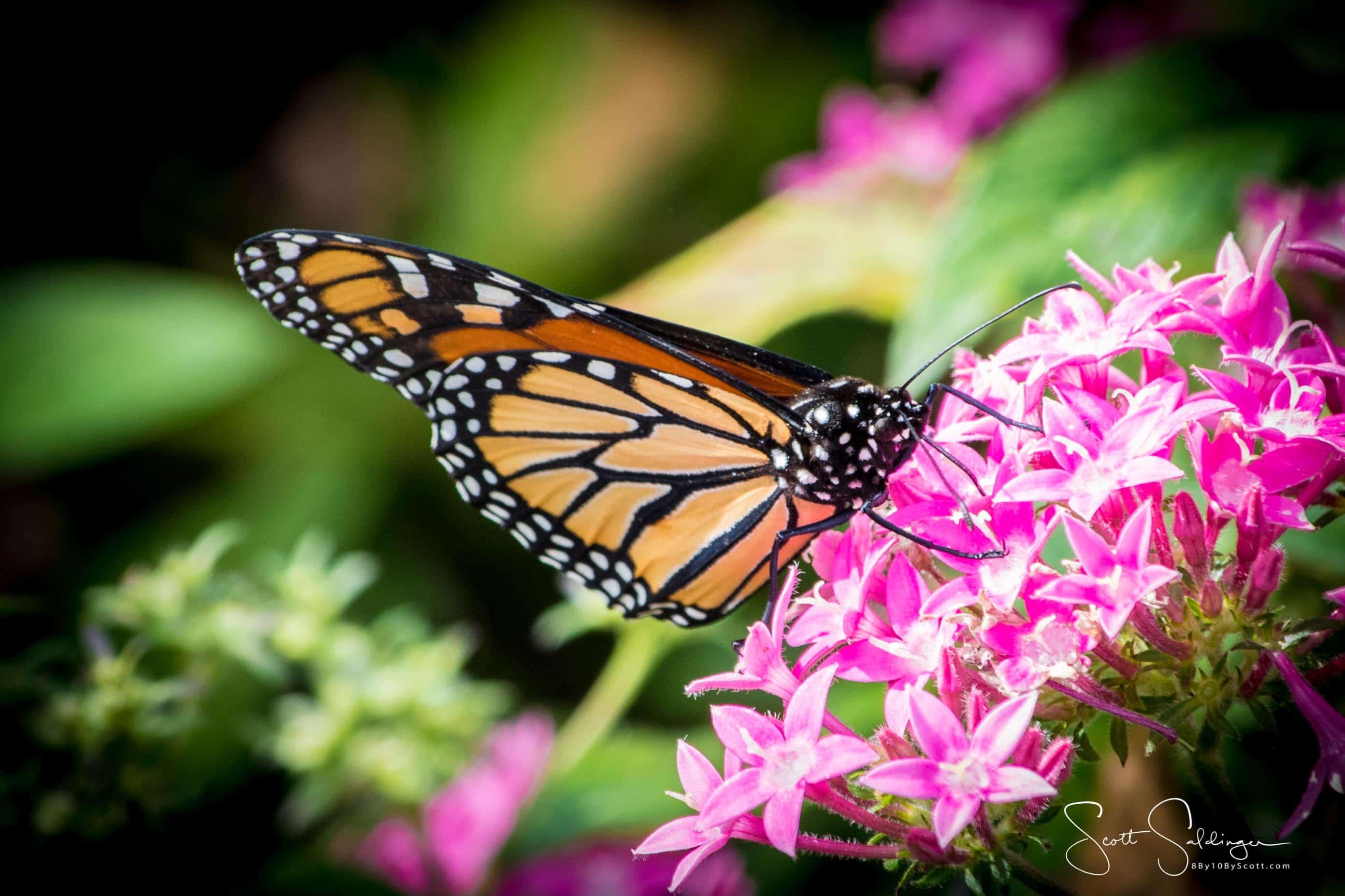 Arboretum102117-2516