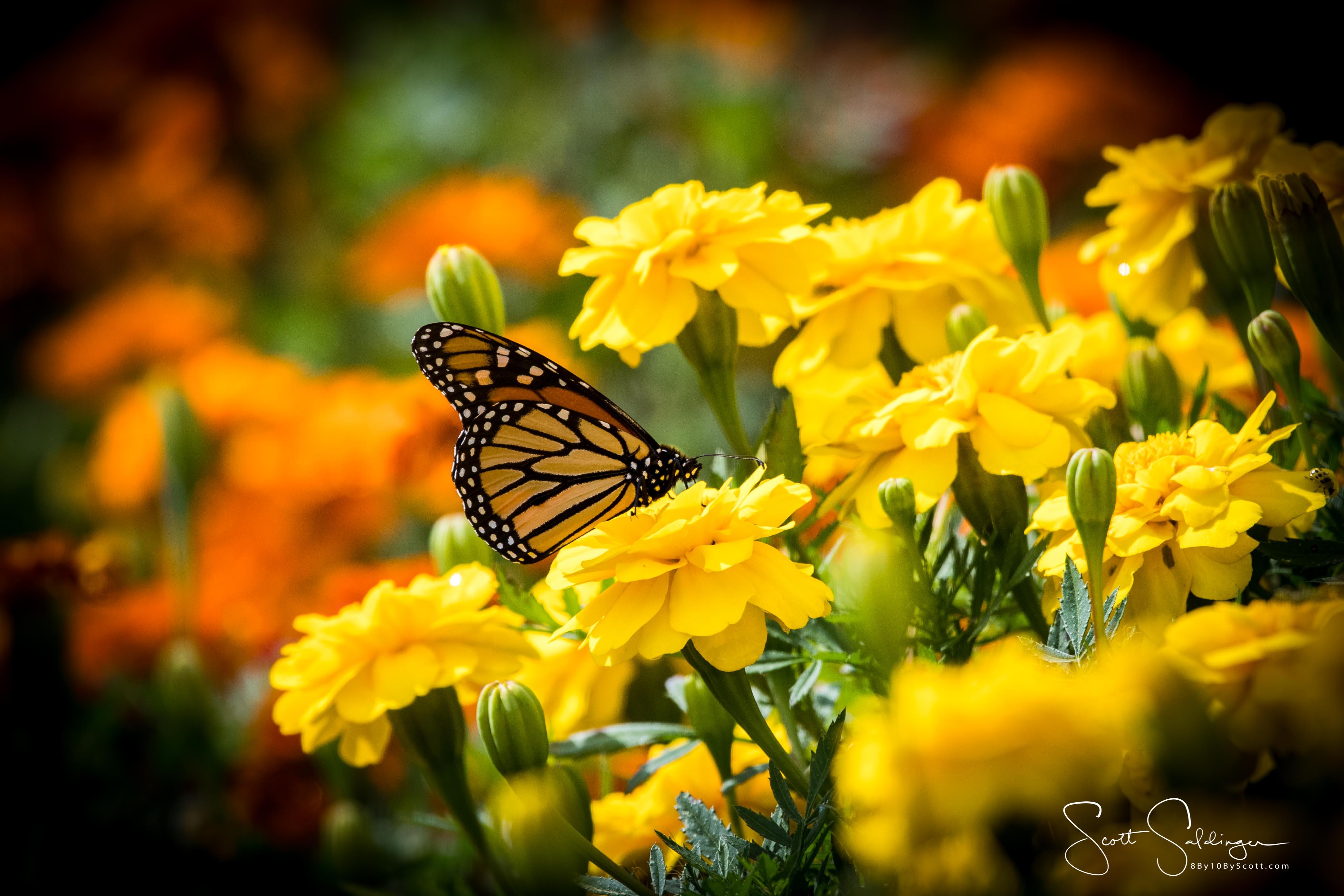 Arboretum102117-2875