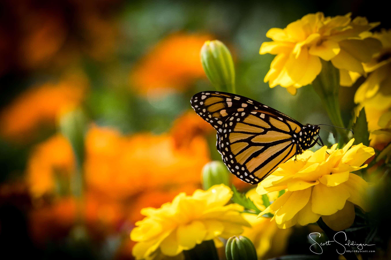Arboretum102117-2876