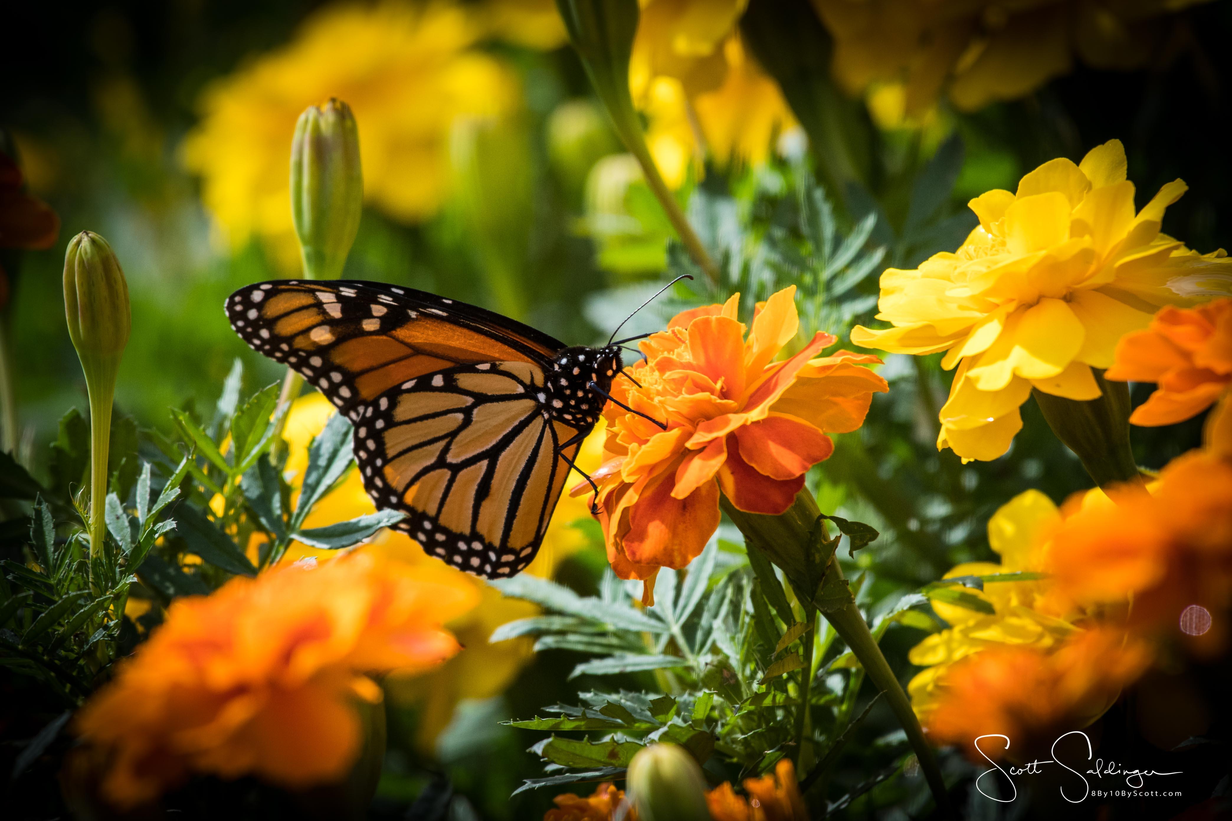 Arboretum102117-2918