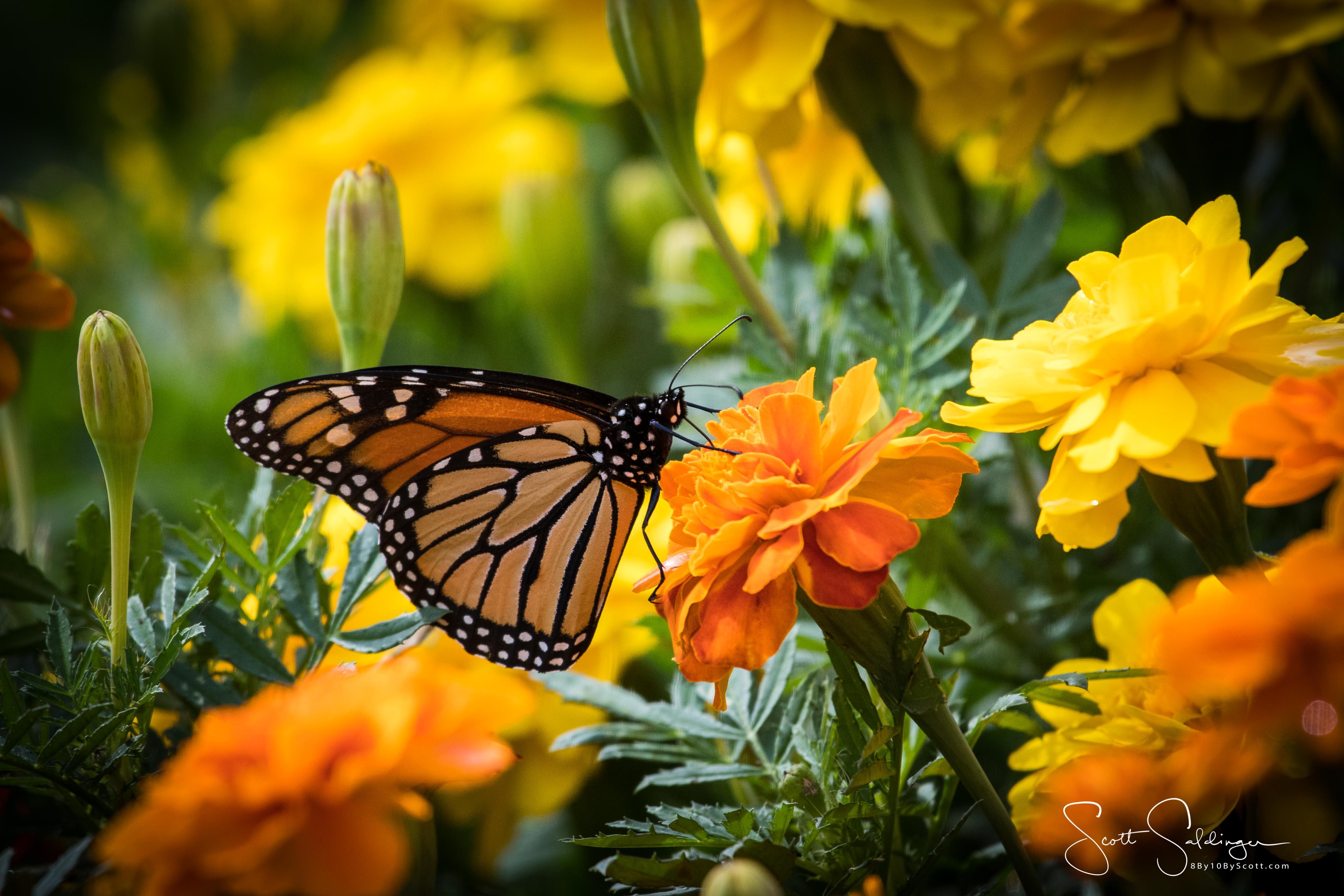 Arboretum102117-2920