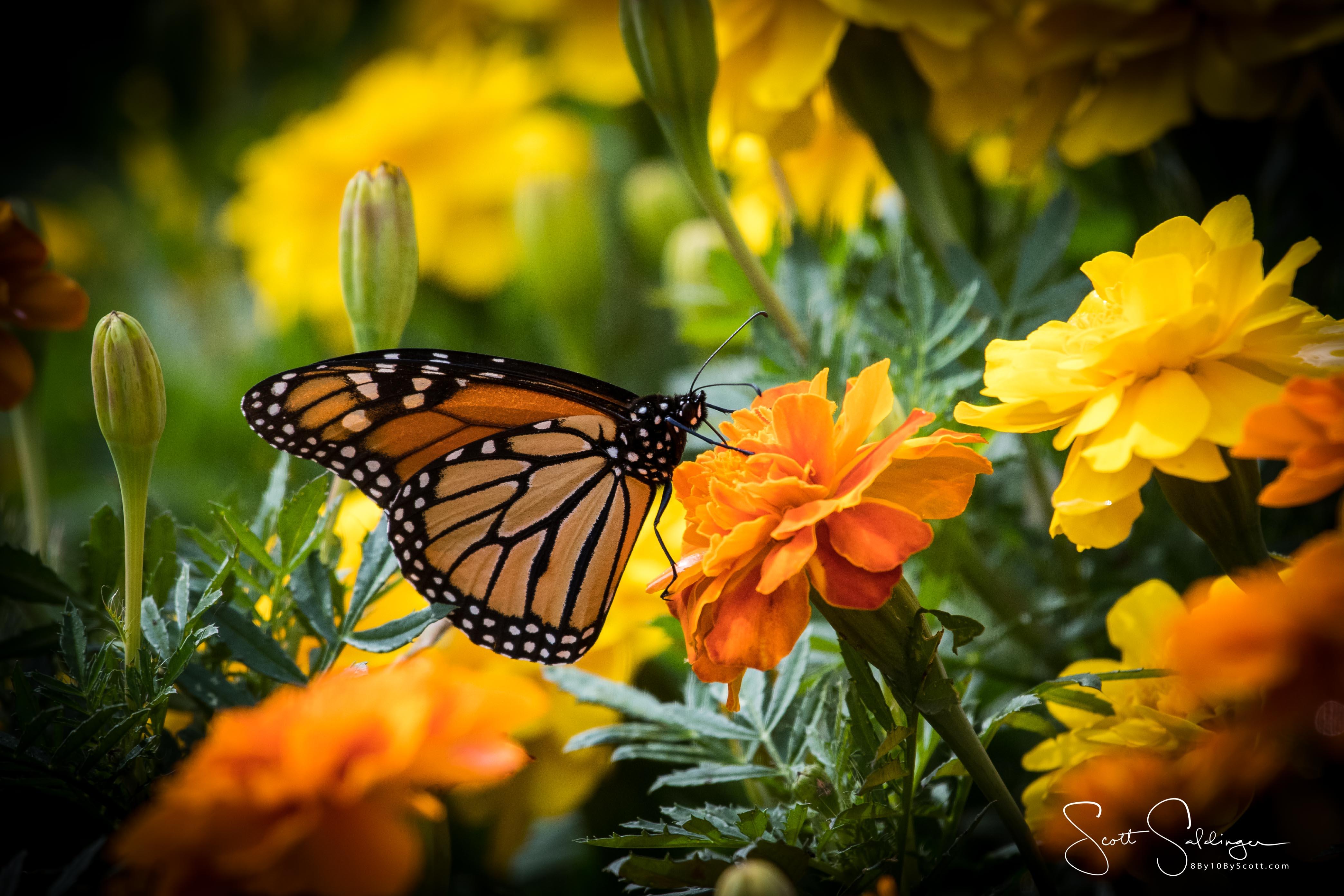Arboretum102117-2921