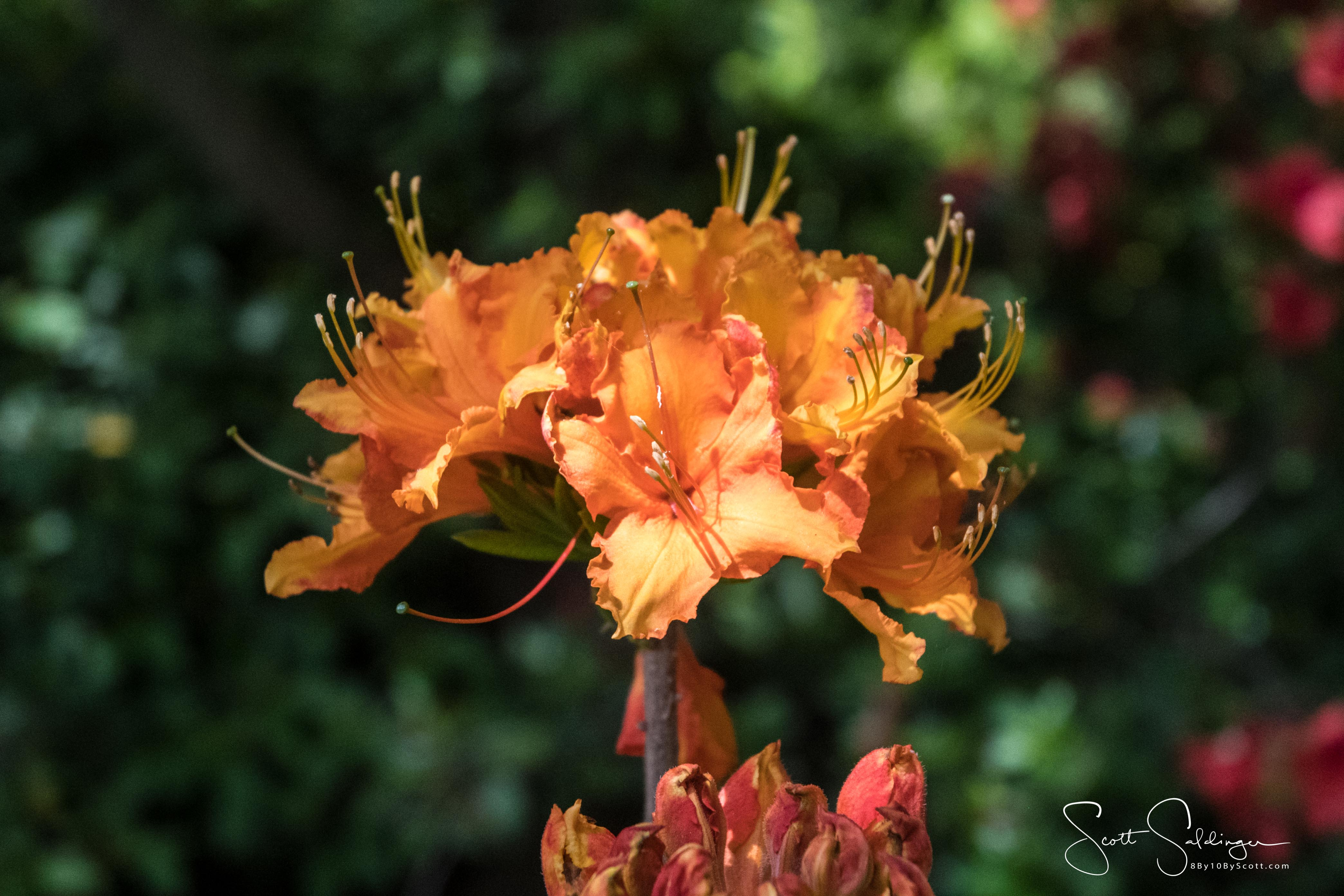 Dallas_Arboretum-15