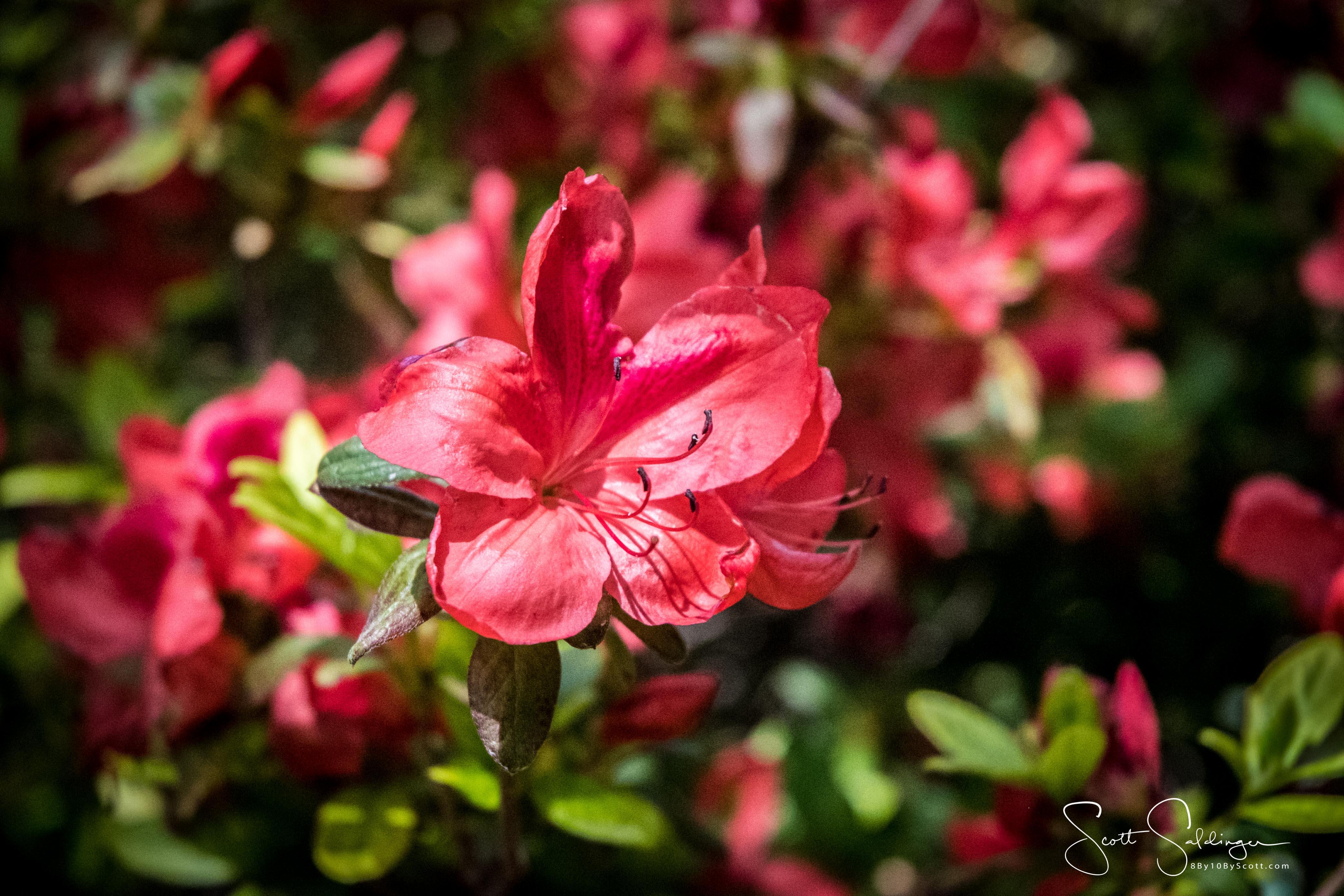 Dallas_Arboretum-16