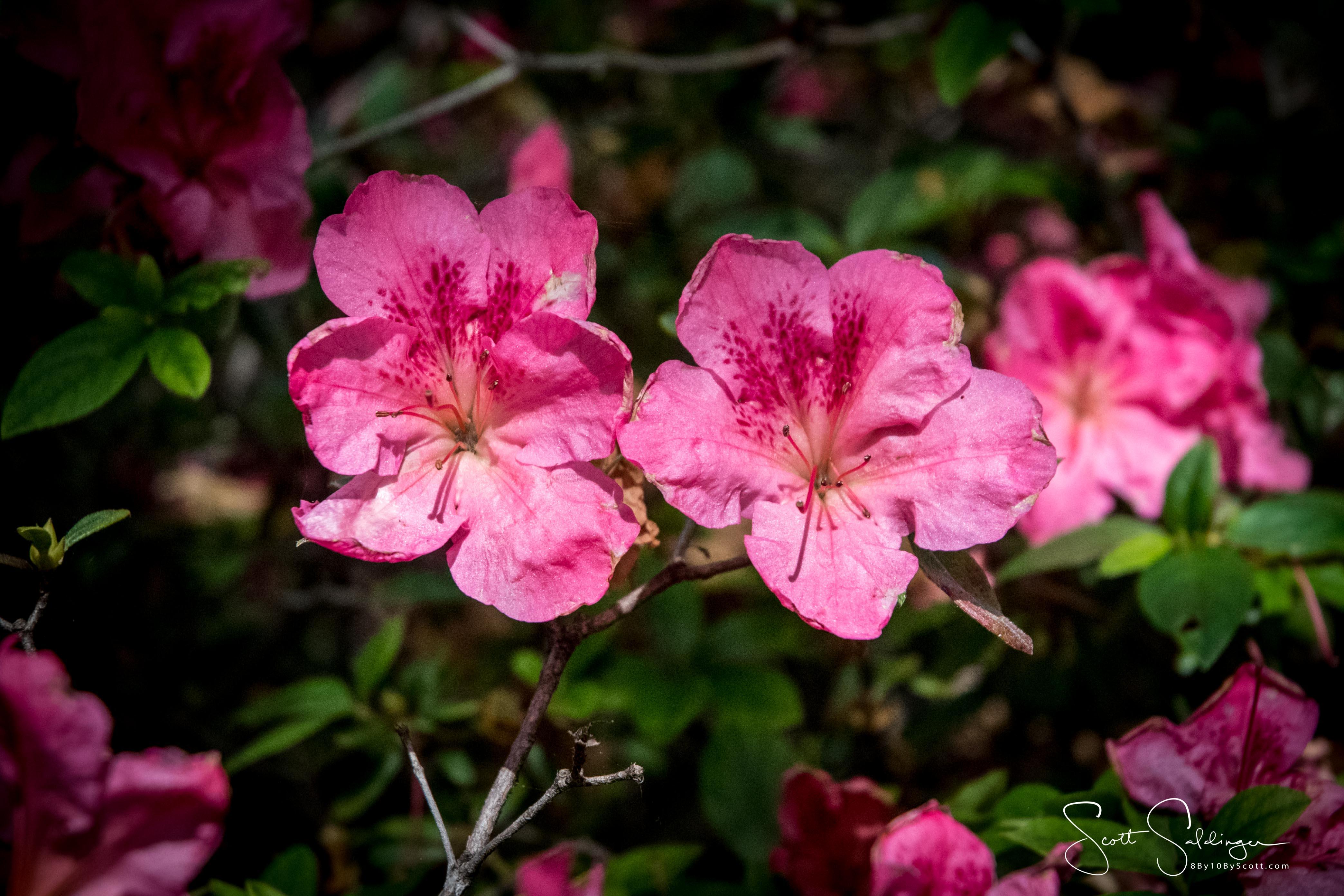 Dallas_Arboretum-20
