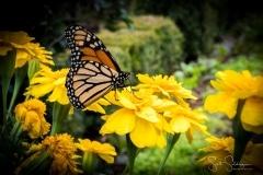 Arboretum102117-2345