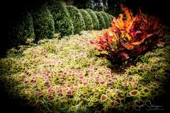 Arboretum102117-2365