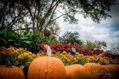 Arboretum102117-2400