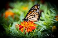 Arboretum102117-2699