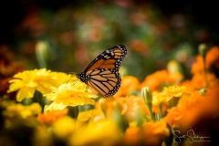 Arboretum102117-2881