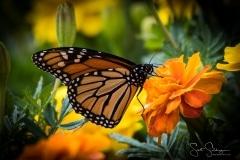 Arboretum102117-2923