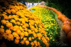 Arboretum102117-3107