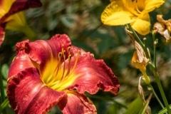 Arboretum51417-2932