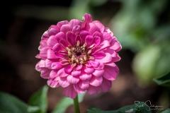 Dallas_Arboretum-104