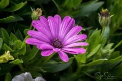 Dallas_Arboretum-118