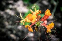 Dallas_Arboretum-21
