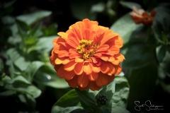 Dallas_Arboretum-23