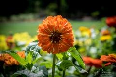 Dallas_Arboretum-25