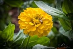 Dallas_Arboretum-35