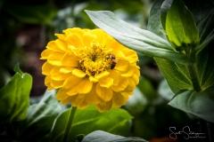 Dallas_Arboretum-38