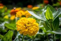 Dallas_Arboretum-42