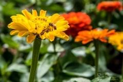Dallas_Arboretum-44