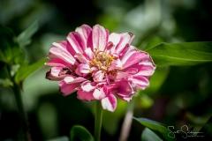 Dallas_Arboretum-67