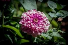 Dallas_Arboretum-68