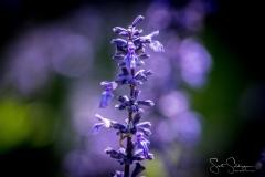 Dallas_Arboretum-7