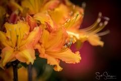 Dallas_Arboretum-9