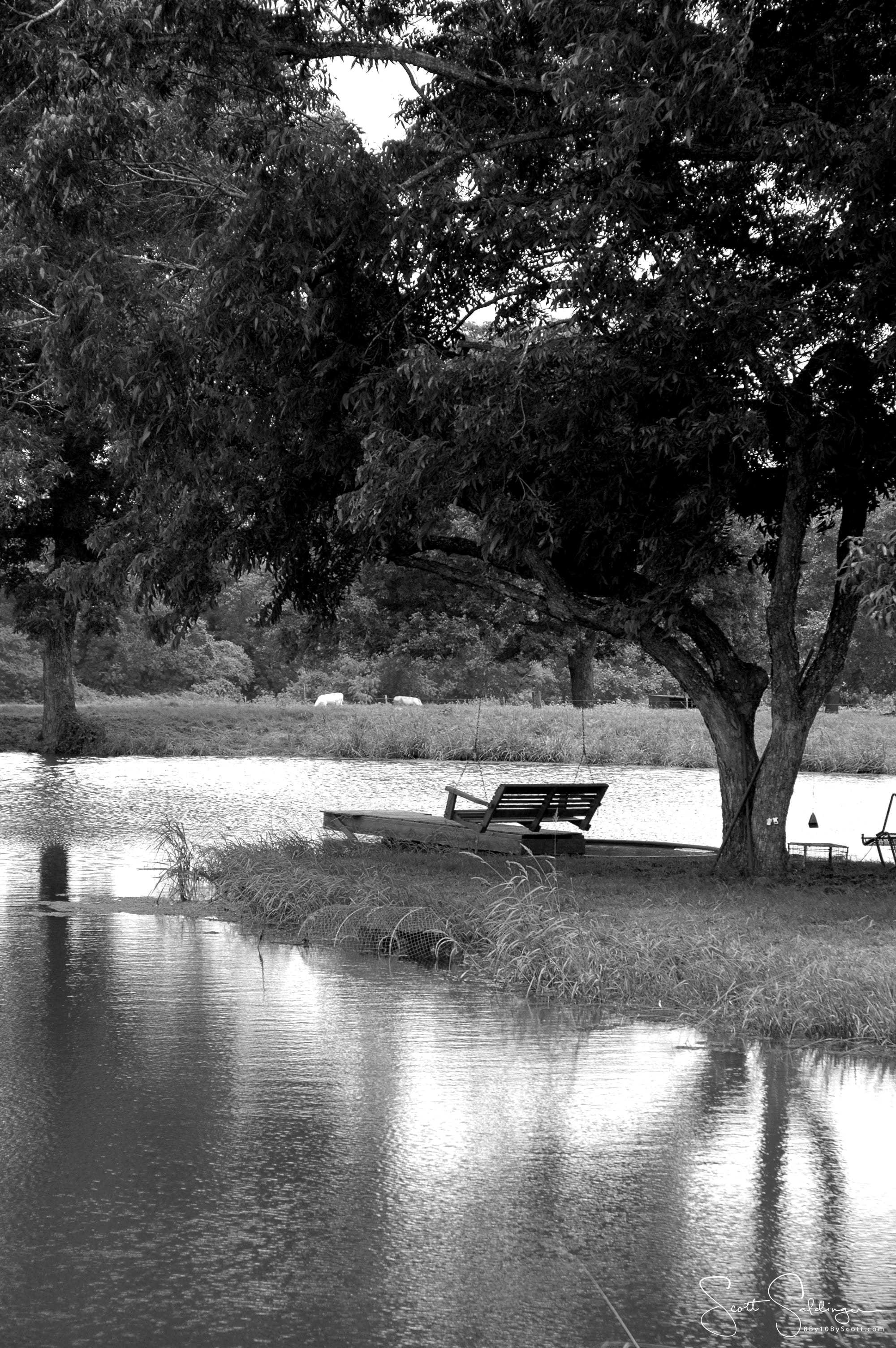 B&W Swing on water